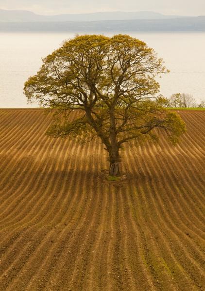 Ploughed Field by canonfan