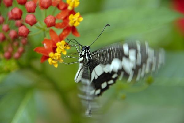 Flutterfly by Mandi