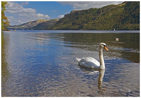 Ullswater Swan by andychatt
