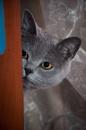 Spy at home:-) by mstuber