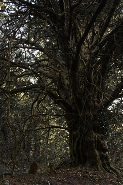 Tree Of Souls by Rod20