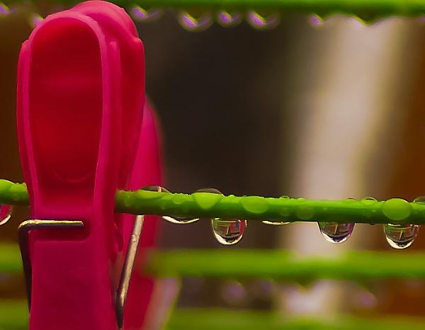 Wet Peg by photohog69
