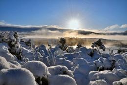 A Winters Scape