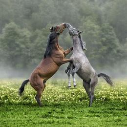 Horses 2012 [ #2 ]