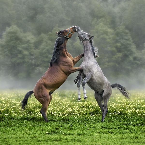 Horses 2012 [ #2 ] by missmoon