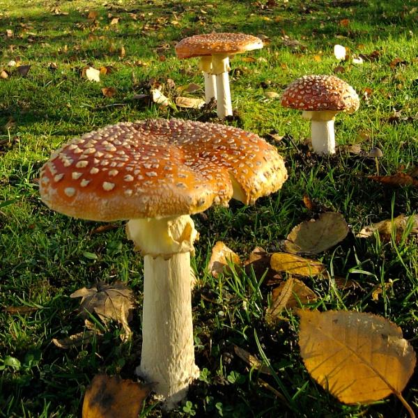 Not Mushroom on the Verge by DaveNib