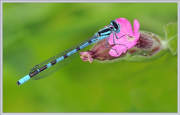 In The Pink  !!! by bricurtis
