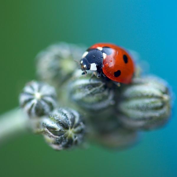 ladybird by danbaker1988