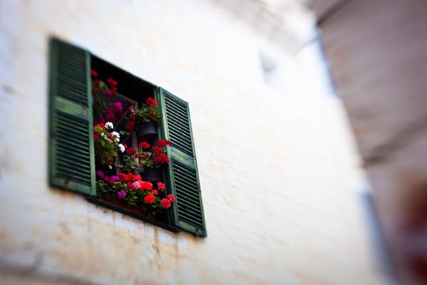 Viva la Ciutadella by sherlob