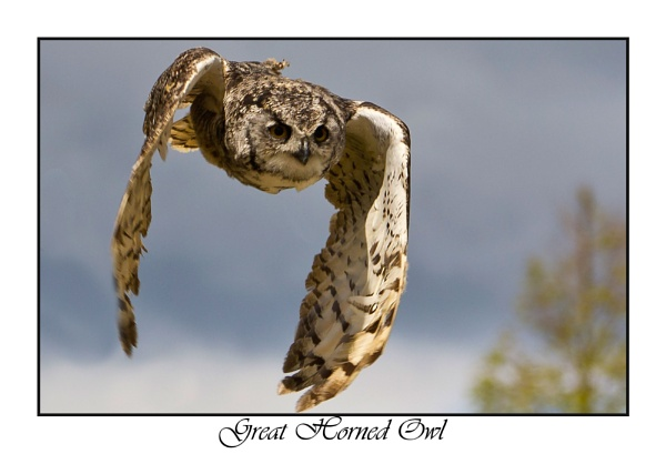 Great Horned Owl by Mike_Smith