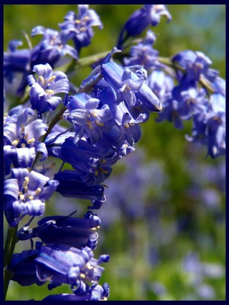 Blue by vikki9876