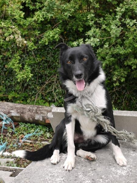 Connemare Farm Dog by Roadracoon