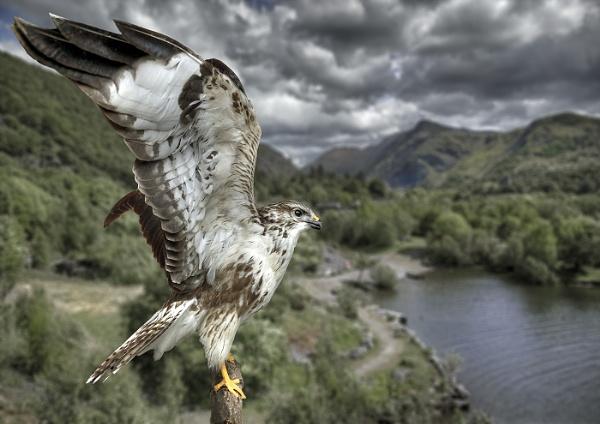 BIRD OF PREY by GERRYGENTRY