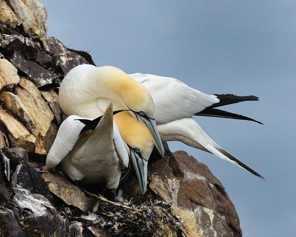Nesting Time by hasslebladuk