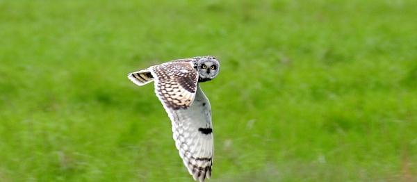Owl by hyd