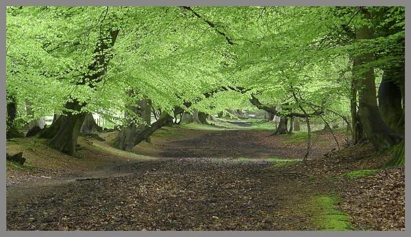 Ashridge Woods by f8