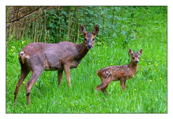 Mum and Baby by darrenwilson41