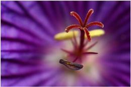 flower in a flower