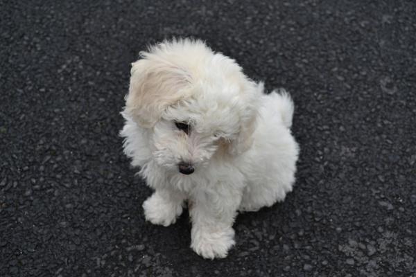 Puppy Dreams by Bruree