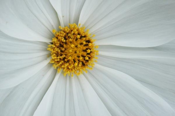 flower by Fatbaldhobbit