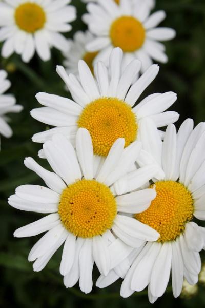 flower 2 by Fatbaldhobbit