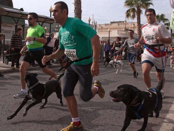 Running Dogs by TT999