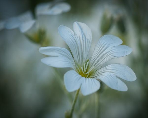 Garden Flower by rogerbryan