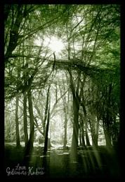Veins of Light