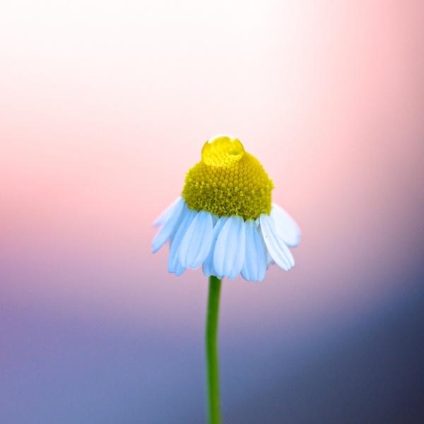 twilight flower by danbaker1988