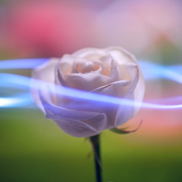 neon rose by danbaker1988