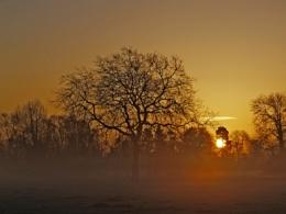Ankerwyke Dawn