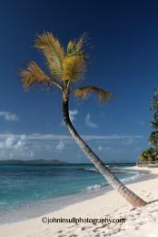 Palm Island View
