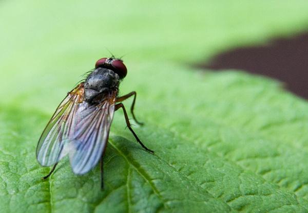 Fly by MrGoatsmilk