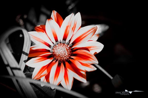 In my garden by SteveHarry