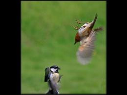 Aerial Conflict
