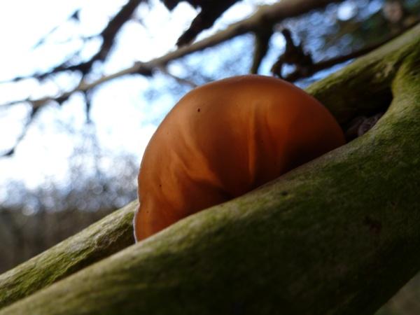 Fungi by seaviewlou