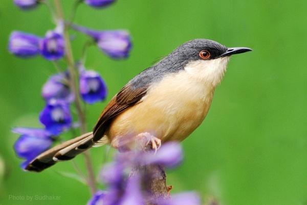 birds by myphotoz