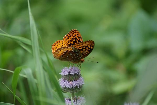 Happy Butterfly by RickFreid