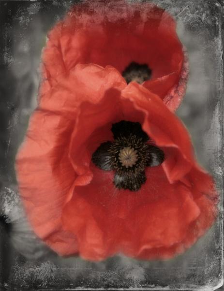 Colour Pop Poppy by Spangle2008