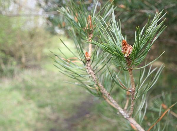 branch by miaallaker