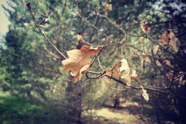 autumn leafs by miaallaker