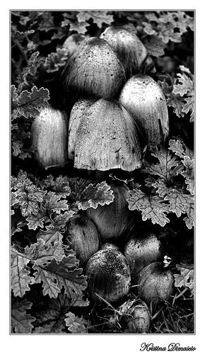 Mushrooms by kristinadimascio