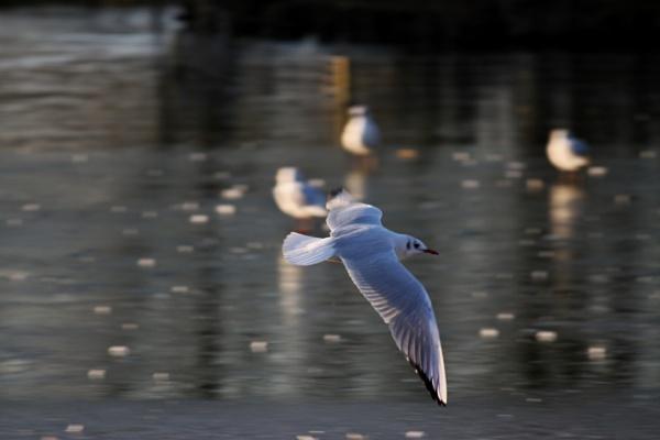 flyby by Fatbaldhobbit
