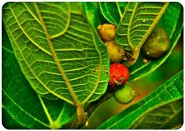 wild Plants.......