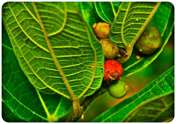 wild Plants....... by jaycelle3