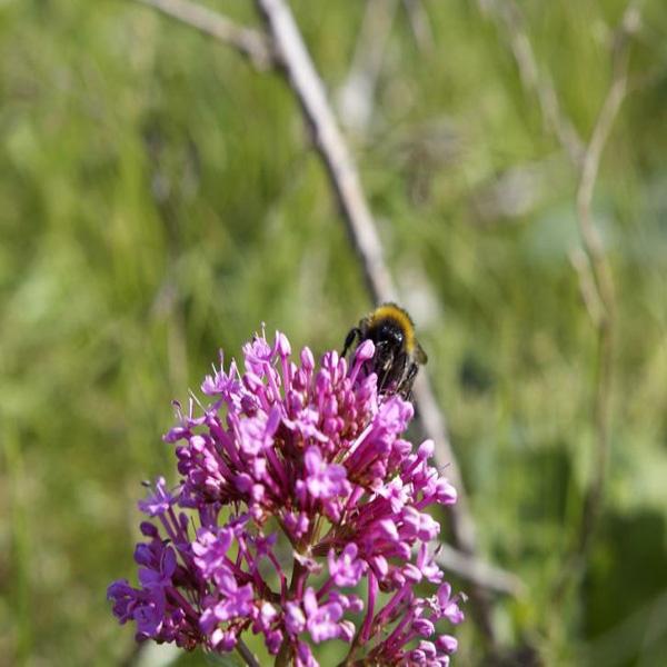 Bee feeding by ce405