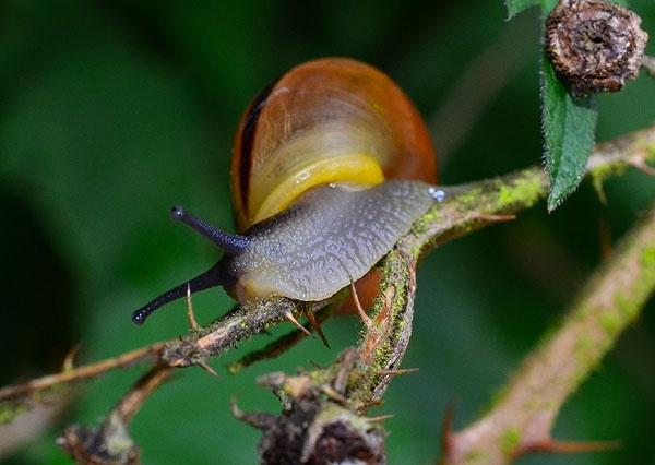 Snail Macro by StevenPrice