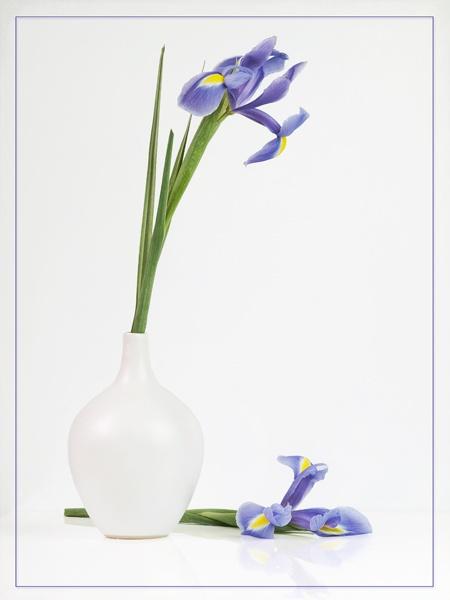 Iris by JenniCh
