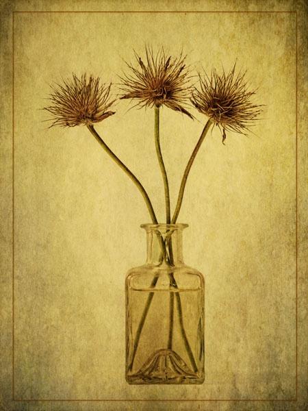 Seedheads display by JenniCh