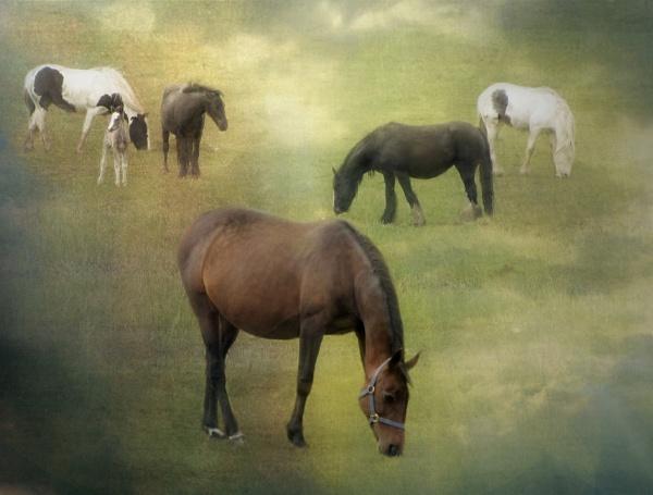 Field of Dreams by gingerdelight